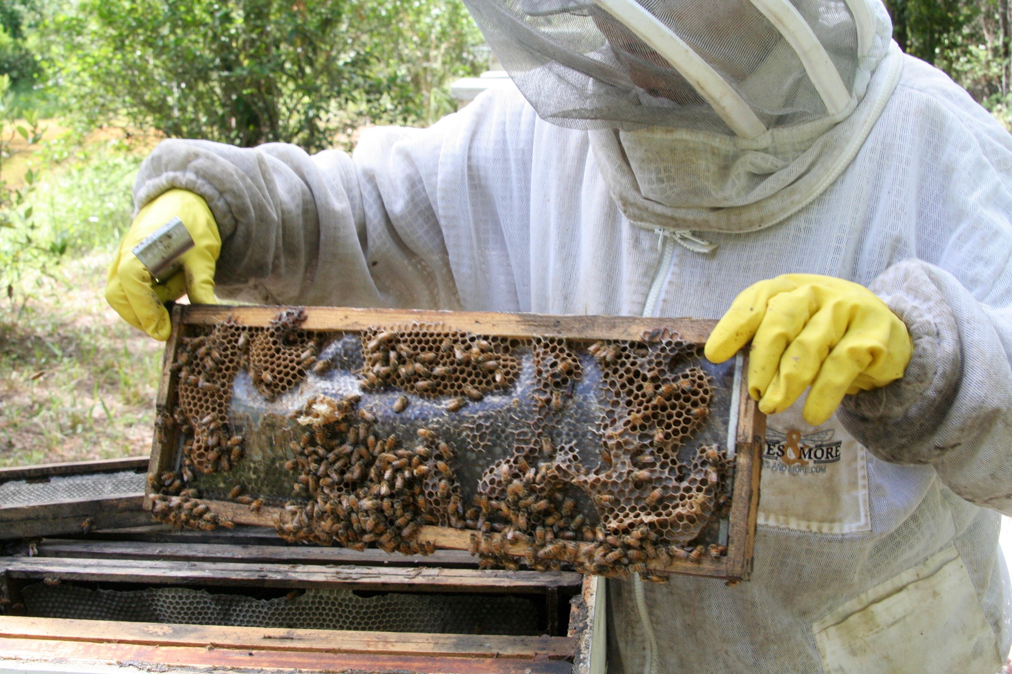 MNL Beekeeper Wassman 1609