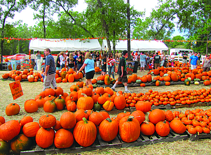 Pick your pumpkin patch