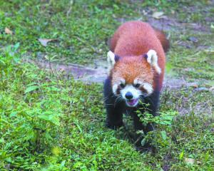fnl-travel-pandas-1701a