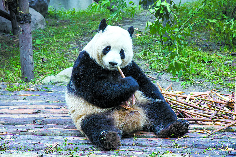 fnl-travel-pandas-1701b