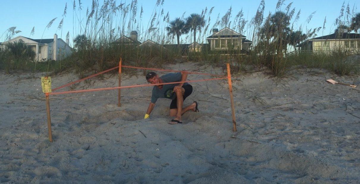 Sea turtle season is here